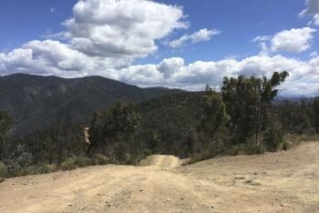 Down Wombat Range Track