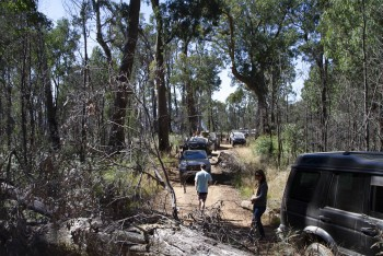 Tree down on Cynthia Range Track